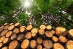 El uso de la biomasa no para de crecer, apúntate a este curso y empieza tu carrera profesional  Fuente: Energías Renovables